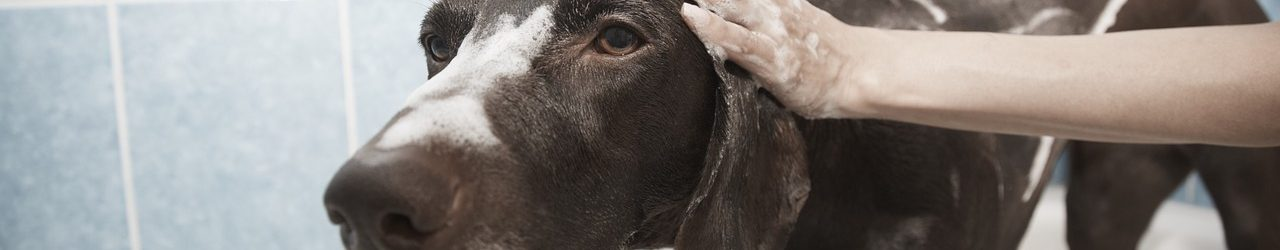 laver chien